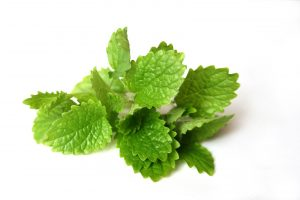 Lemon Balm Leaf For Sleep